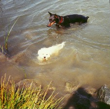 Swimming with the BIG dogs. max4.jpg